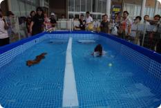 犬だらけの水泳大会のルール