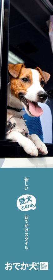 新しい愛犬とのおでかけスタイル