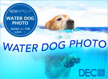 NEW�C�x���g!!WATER DOG PHOTO
