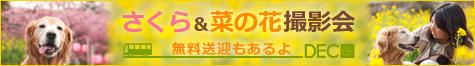 桜と菜の花の撮影会   |DOG TOUR