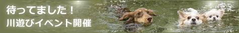 待ってました!川遊びイベント開催   |DOG TOUR