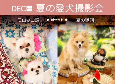 夏の愛犬撮影会