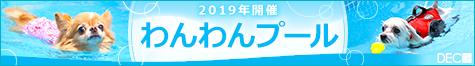 2019年わんわんプール開催