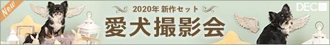 2020年新作セット 愛犬撮影会  |DOG PHOTO