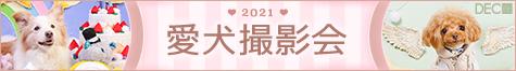 2021年 愛犬撮影会 |DOG PHOTO