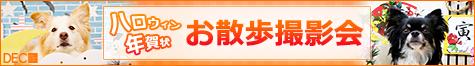 ハロウィンセット&お正月セット愛犬撮影会