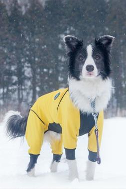 スノートレッキングに参加する愛犬 【DEC】