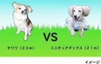 犬種別ハンデ戦特別ルール